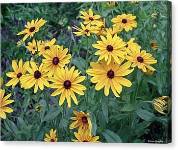 Yellow Daisy Flowers #3 Canvas Print