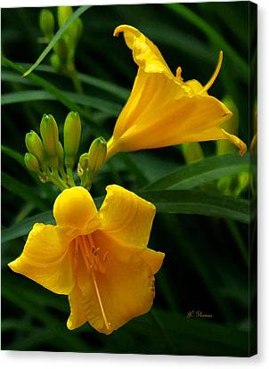 Canvas Print featuring the photograph Yellow Daylilies by James C Thomas