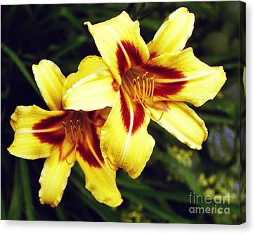 Canvas Print featuring the photograph Yellow Daylilies  by Tom Brickhouse