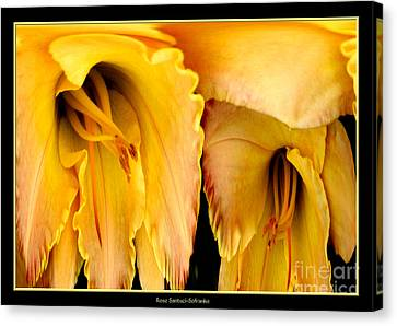 Yellow Daylily Abstract Canvas Print by Rose Santuci-Sofranko