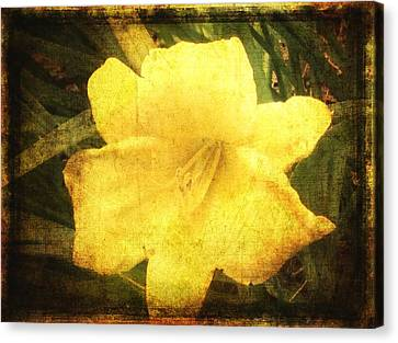 Yellow Daylily  Canvas Print by Betty  Pauwels