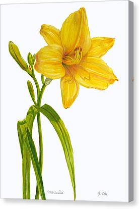 Yellow Daylily - Hemerocallis Canvas Print