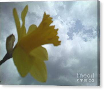 Yellow Delight Canvas Print by Thommy McCorkle