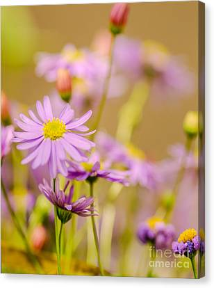 Yellow Disc Purple Daisies  Canvas Print by Optical Playground By MP Ray