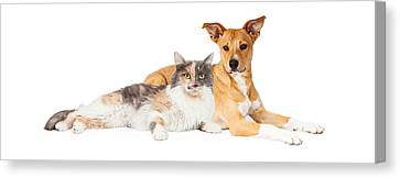Yellow Dog And Calico Cat Canvas Print by Susan Schmitz
