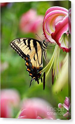 Canvas Print featuring the photograph Yellow Eastern Swallowtail Butterfly by Eva Kaufman