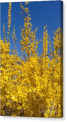 Yellow Explosion Canvas Print by Melissa Petrey