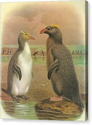 Yellow Eyed Penguin And Snares Crested Penguin  Canvas Print by Anton Oreshkin