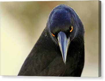 Yellow Eyes Canvas Print