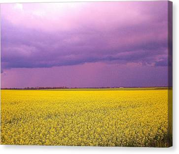 Yellow Field Purple Sky Canvas Print by Cathy Long