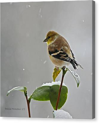 Yellow Finch Canvas Print by Denise Romano