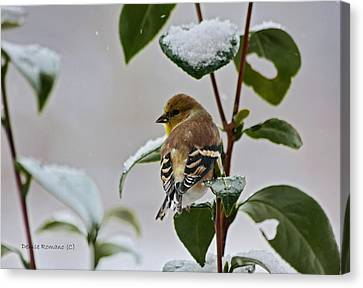 Yellow Finch On Branch Canvas Print by Denise Romano