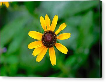 Belle Isle Canvas Print - Yellow Flower 2 by Gary Marx