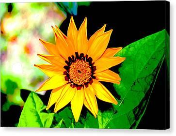 Yellow Flower Canvas Print by Carolyn Reinhart