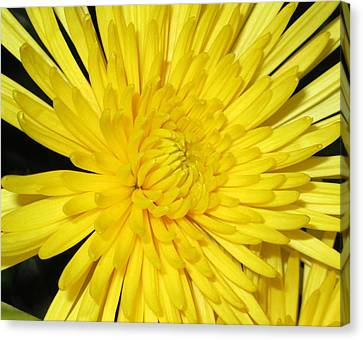 Canvas Print featuring the photograph Yellow Flower Closeup by Barbara Yearty