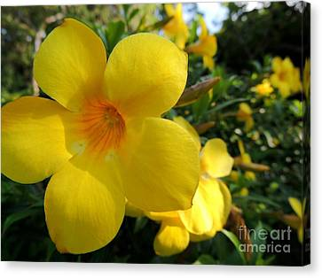 Canvas Print featuring the photograph Yellow Flower by Kristine Merc