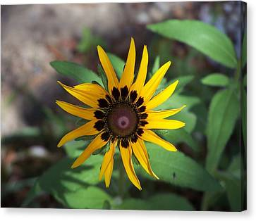 Canvas Print featuring the photograph Yellow Flower by Michele Kaiser