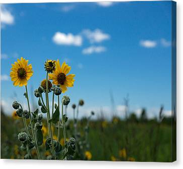 Yellow Flower On Blue Sky Canvas Print