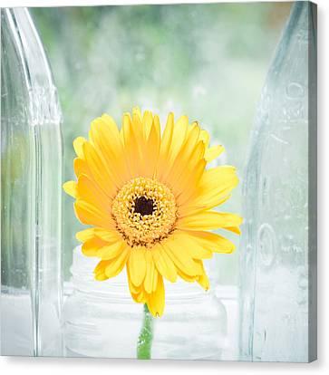 Yellow Flower Canvas Print by Tom Gowanlock