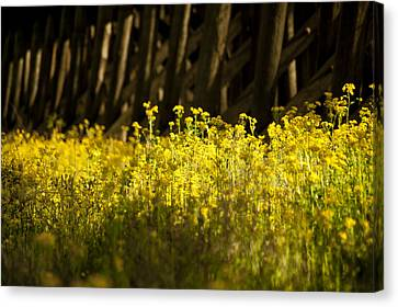 Yellow Flowers  Canvas Print by Alicia Morales