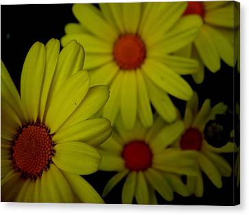 Yellow Flowers Canvas Print by Andrea Galiffi