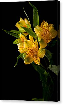 Canvas Print featuring the photograph Yellow Flowers by Sennie Pierson