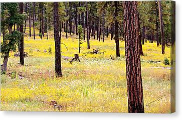 Yellow Forest Canvas Print by Kume Bryant