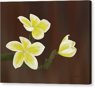 Yellow Frangipani Canvas Print by Tim Stringer