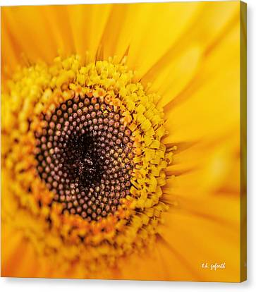 Canvas Print featuring the photograph Yellow Gerbera Squared by TK Goforth