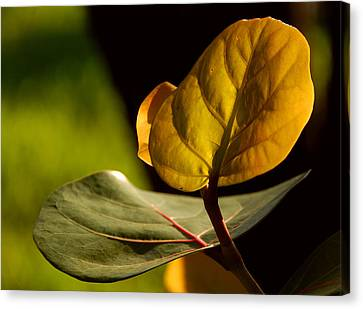 Canvas Print featuring the photograph Yellow-green by Lorenzo Cassina