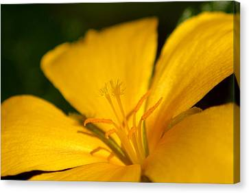 Canvas Print featuring the photograph Yellow by Greg Allore