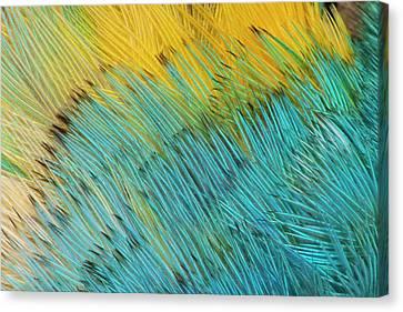 Yellow-headed Amazon Parrot Canvas Print