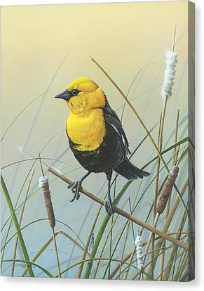 Canvas Print featuring the painting Yellow-headed Black Bird by Mike Brown