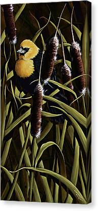 Cattail Canvas Print - Yellow Headed Blackbird And Cattails by Rick Bainbridge