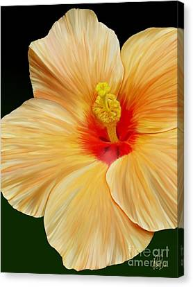 Yellow Hibiscus Canvas Print by Rand Herron
