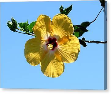 Yellow Hibiscus Canvas Print by Zina Stromberg