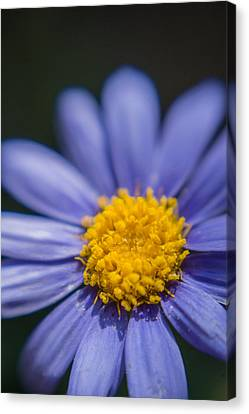 Yellow In The Middle Canvas Print by Scott Campbell
