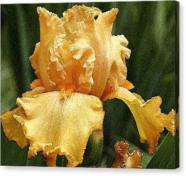 Canvas Print featuring the photograph Yellow Iris by Susan Crossman Buscho