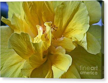 Canvas Print featuring the photograph Yellow Is Yellow by Alison Caltrider