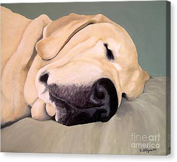 Yellow Lab - A Head Pillow Is Nice Canvas Print by Amy Reges