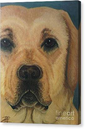 Yellow Lab Canvas Print by Ana Marusich-Zanor