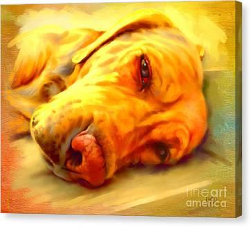Yellow Labrador Portrait Canvas Print by Iain McDonald