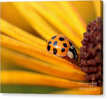 Yellow Lady - 1 Canvas Print
