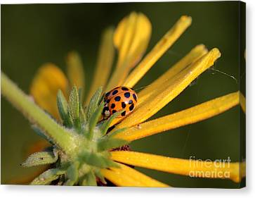 Canvas Print featuring the photograph Yellow Lady - 2 by Kenny Glotfelty