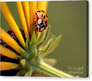 Canvas Print featuring the photograph Yellow Lady - 4 by Kenny Glotfelty