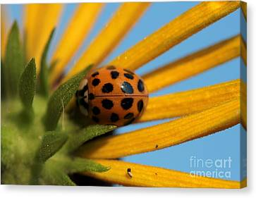 Canvas Print featuring the photograph Yellow Lady Bug - 5 by Kenny Glotfelty
