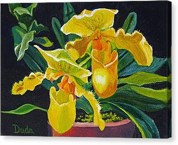 Yellow Lady Slippers Canvas Print