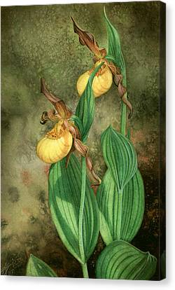 Yellow Lady's Slippers Canvas Print
