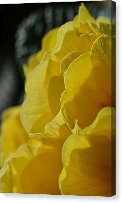 Yellow Landscape Canvas Print by Donna Blackhall