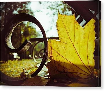 Yellow Leaf On A Bench In A Park Canvas Print
